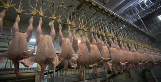 Китай успешно поставляет мясо птицы в Европу